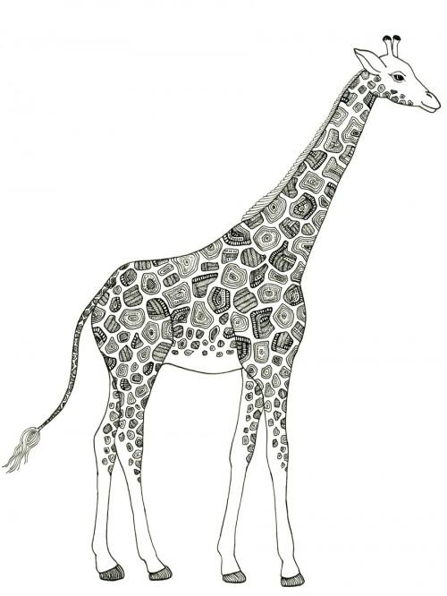 Zana Bass_Giraffe November 2014