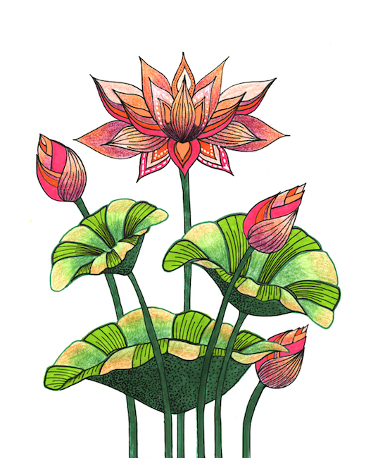 zana bass january 2019 lotus web